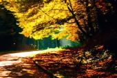 padající listí v podzimním parku. žlutá ozářená stromy
