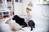 Holčička, která si zahrává se psy na koberci doma