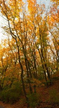 Park in Prague. Autumn landscape.