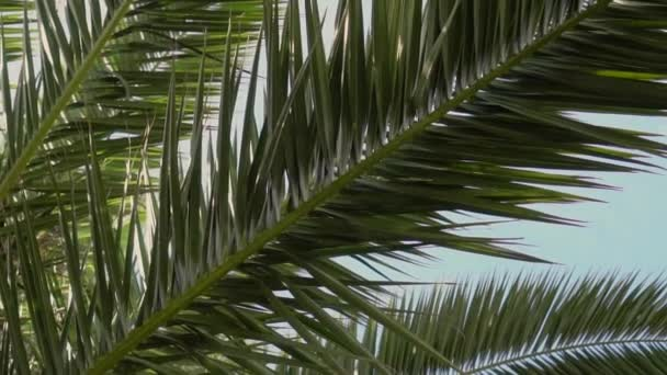 Green juicy branches of date palm on the background of blue clean summer sky