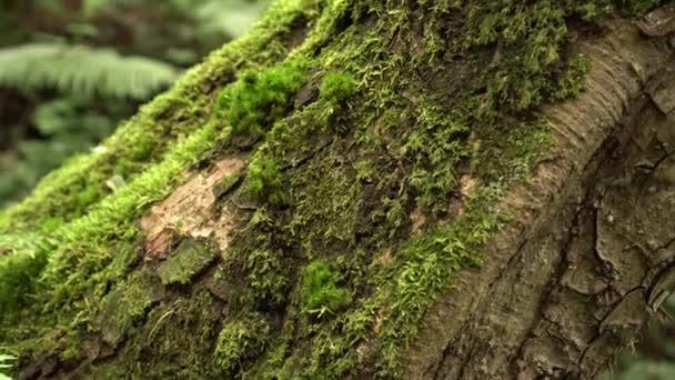 Moosbewachsener schräger Baumstamm mit Farn in einem wilden feuchten, unberührten Wald. die Magie und Schönheit der antiken Natur