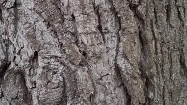 Jehličnatá kůra s vráskami a prasklinami v lese. Texturální přírodní borovicové abstraktní pozadí. Pohyb fotoaparátu Dolly