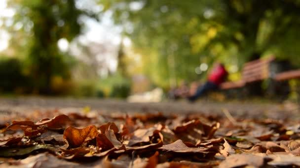 Herabfallendes Laub auf dem Parkboden