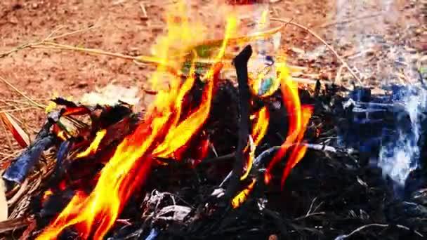 Oheň, který hoří suché listí v zahradě.