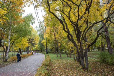 Autumn bright landscape in Izmailovsky Park in Mosco