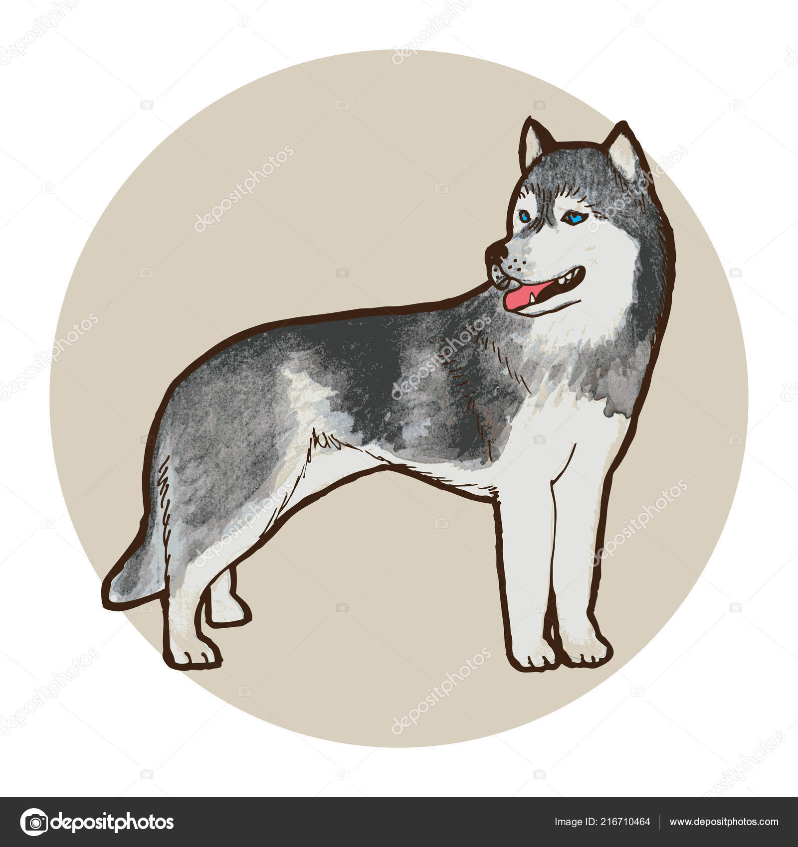 Husky Dog Breed Outline Vector Illustration Stock Vector