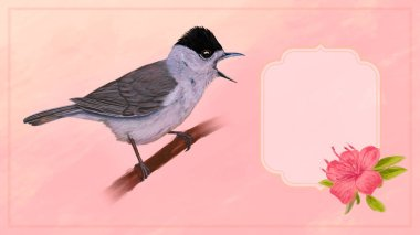 blackcap with flowers on light pink card background