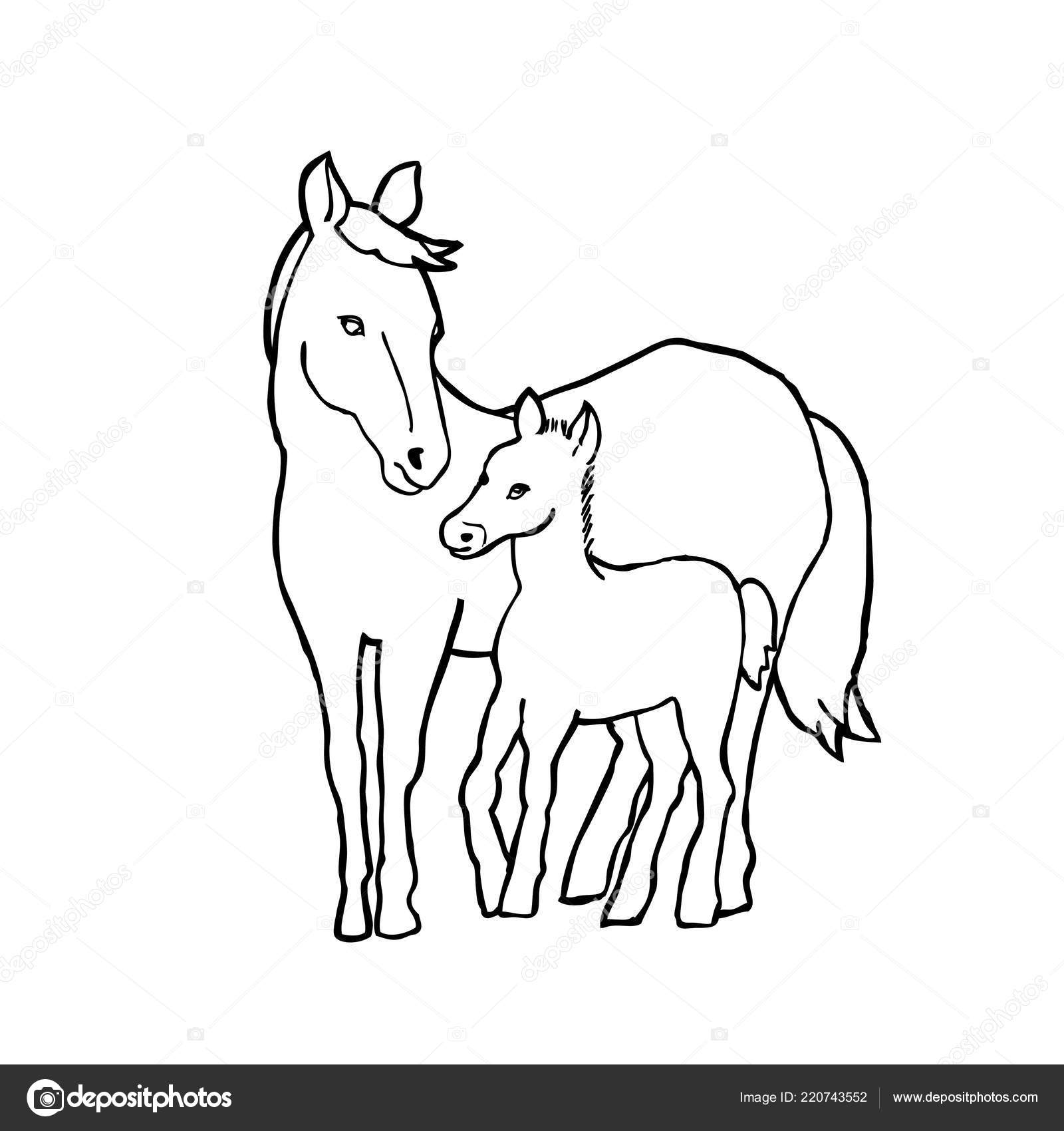 Vector Illustration Two Horses Outline Drawing White Background Stock Vector C Virivlev 220743552