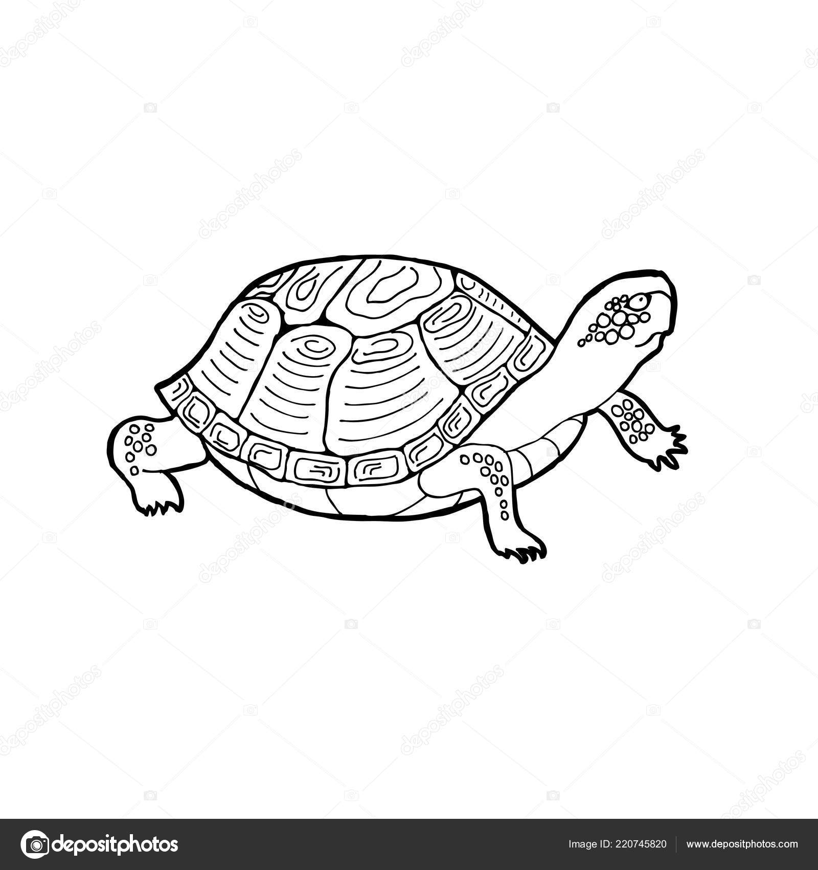 Vector Illustration Turtle Outline Drawing White Background Stock