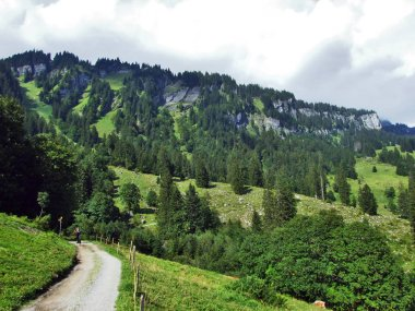 The Braunwald forest in the Glarnerland tourist region - Canton of Glarus, Switzerland