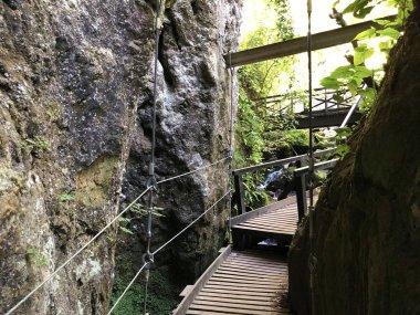 Counts trail or Poucna Grofova staza - Papuk nature park, Croatia