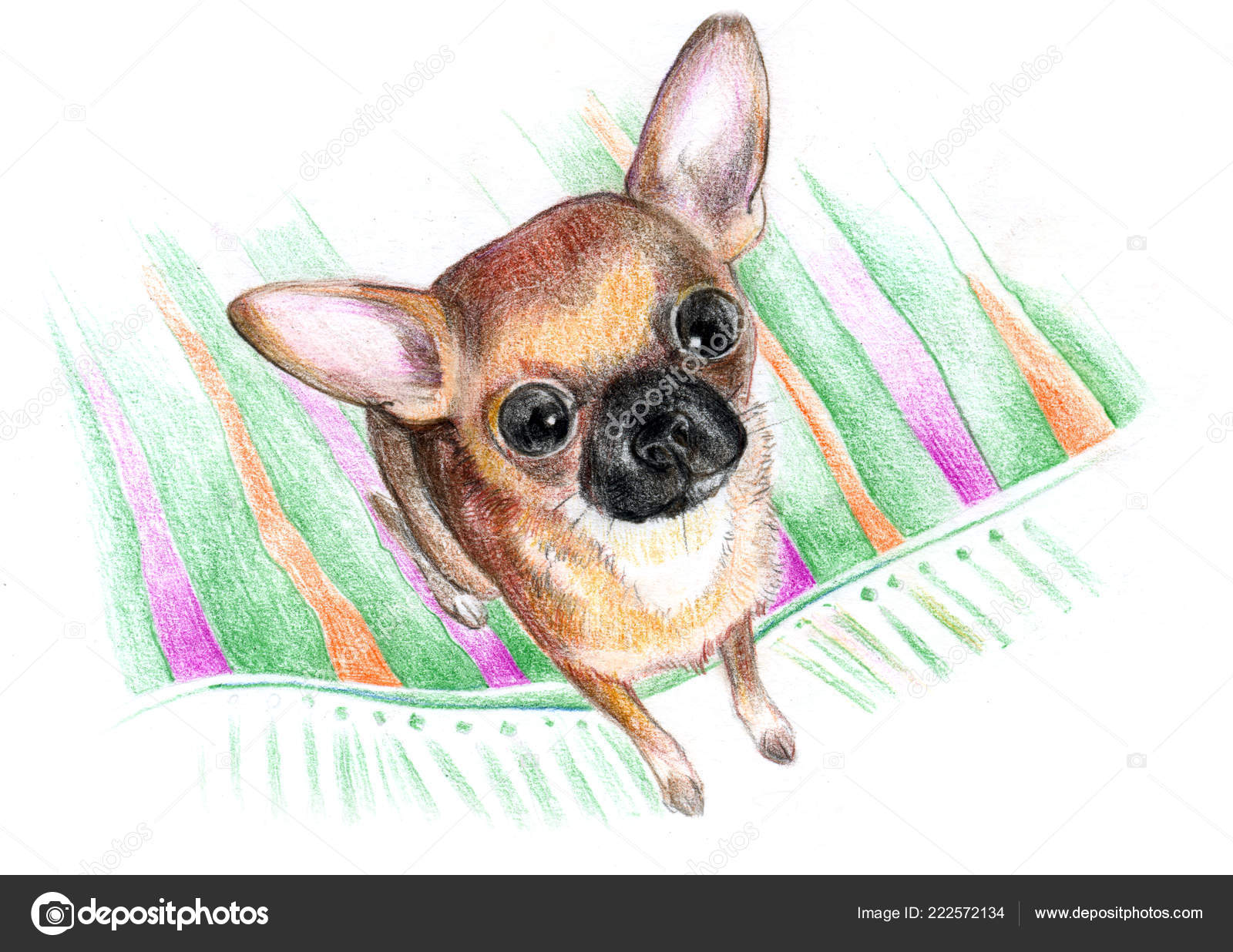 Drawing Paper Colored Pencil Cute Little Dog Rug Breeds