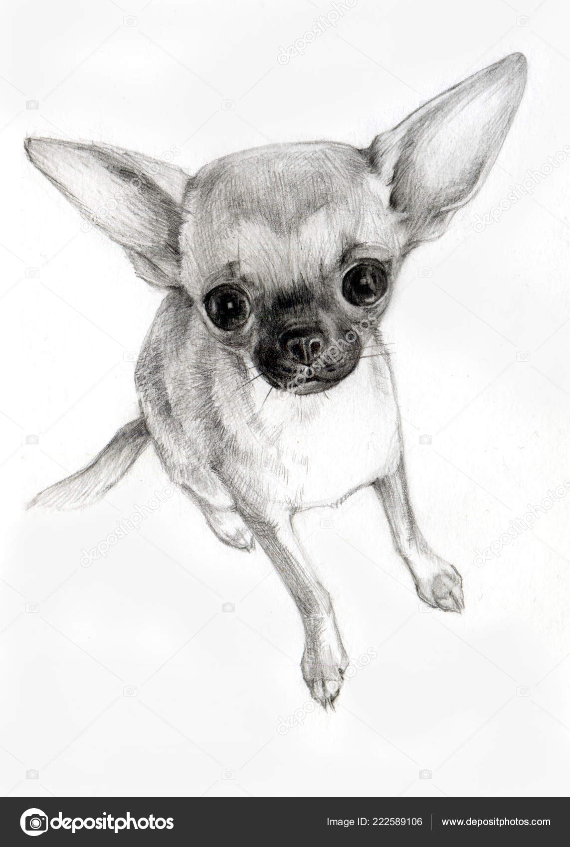 Black White Pencil Drawing Paper Dog Small Pet Chihuahua Puppy Stock Photo C Kdegtiareva Mail Ru 222589106