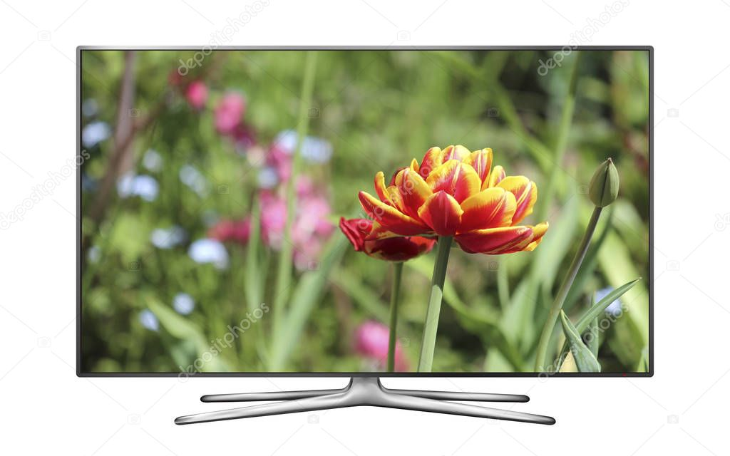 LCD TV isolated on white background with tulip on screen