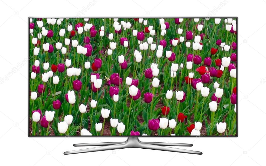 Smart tv isolated on white with tulip flowers on the screen