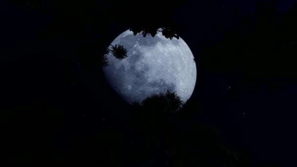 Erdő éjjel nagy telihold