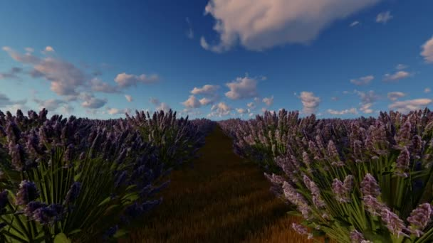 French lavender fields, motion graphic