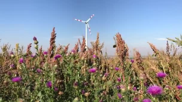 Thistle rostliny s fialové květy na vítr a větrný mlýn turbína věž jako pozadí. Trvale udržitelný alternativní elektřina zdroj energie v souladu s přírodou. Obnovitelné technologie v přírodě