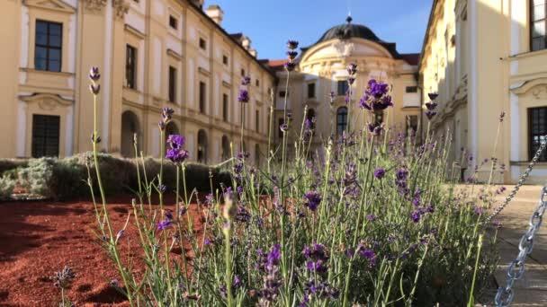 Levandule u Slavkova hrad, Jižní Morava, Česká republika na slunečné ráno. Čelní pohled na Slavkov u Brna palác s nádvořím kvetení. Fialové květiny a létající včely v barokní budově