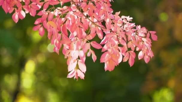 őszi levelek, a napfény