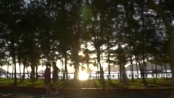 motocyklu večerní slunce svítí skrz palmy