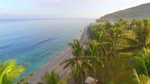 palem a dolů směrem k tropické pláže