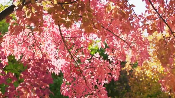 červené podzimní listí v slunečním světle