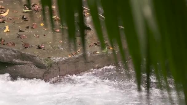 small fast flowing stream to palm frond
