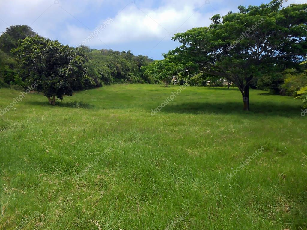 On a sunny day, about mid-day, beneath the blue cloudy sky, a landscape area of grassy land, having scattered tall evergreen trees casting their shadows on the grass surface.