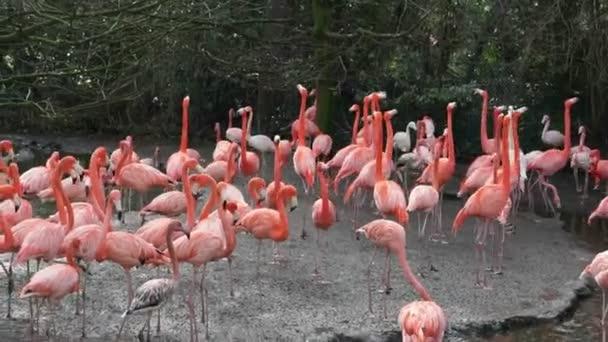 ostrov plný amerických plameňáků, Velká skupina barevných tropických ptáků