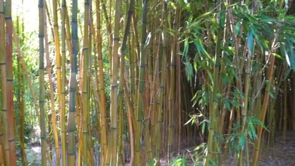 bamboo trunks in in panning motion, tropical garden background