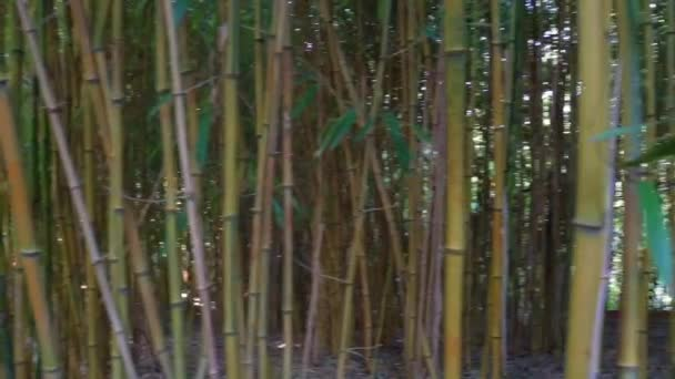 closeup of bamboo trunks in panning motion, tropical nature background