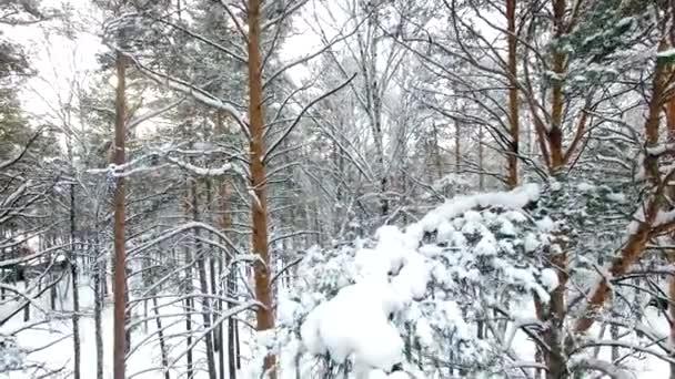 Letecký pohled na zimní les