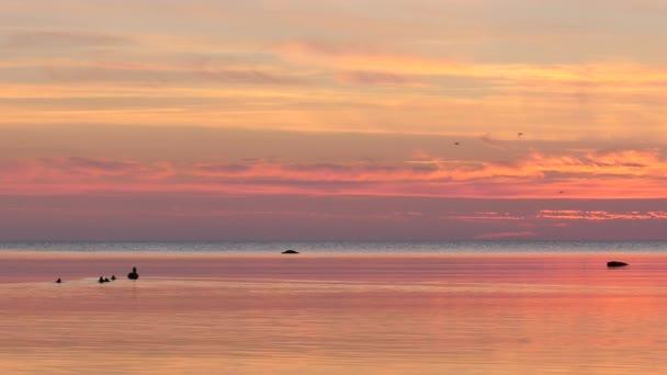 Enten im Wasser vor der Insel Gotland, Südschweden. Die Insel liegt in der Ostsee.