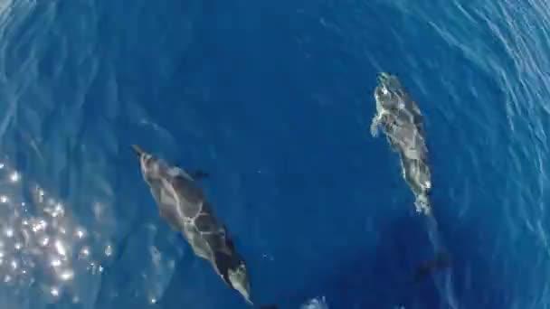 glücklich gestreifter Delfin springt aus dem Meer