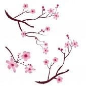 Photo A set of twigs sakura cherry blossoms