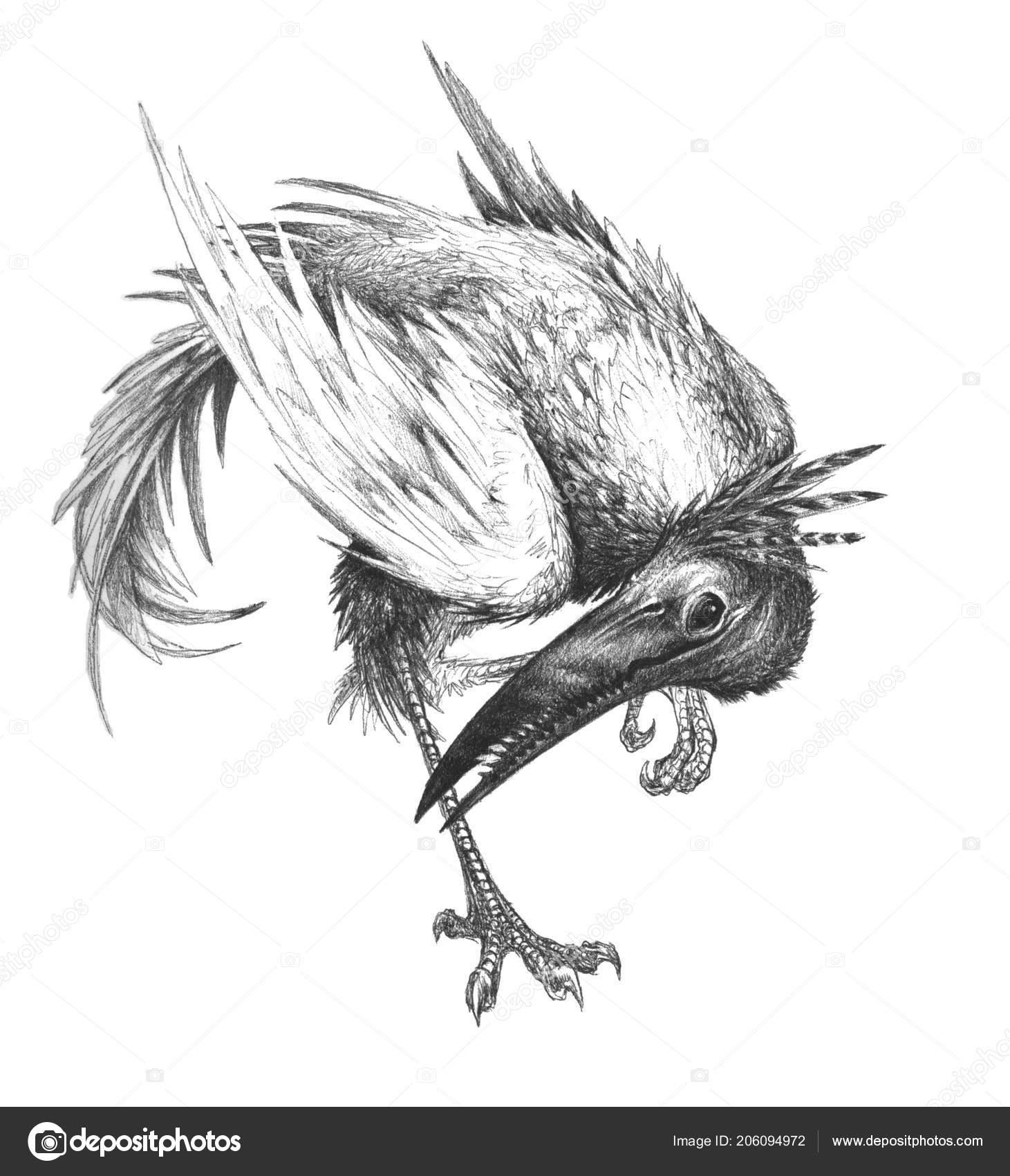Disegno Uccello Creatura Immaginaria Matita
