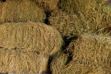 Texture of dry hay. Fodder. Dried grass stems and leaves.