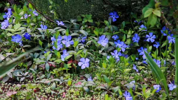 Nabídka jarní květiny kvetly v louce