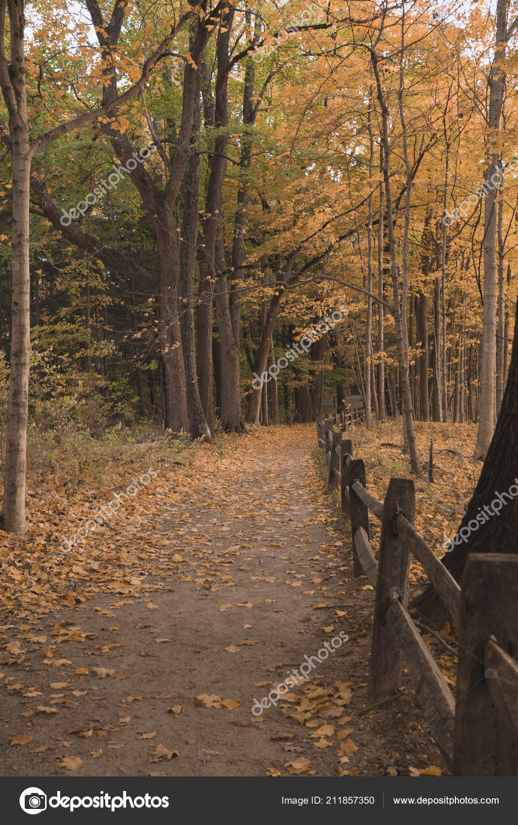 Walking Path Indiana Forest Fall — Stock Photo © agil73 #211857350