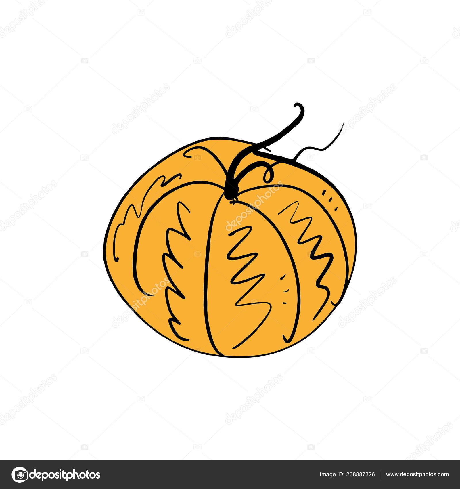 Single Pumpkin Line Sketch Hand Drawn Vector Illustration