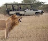 Tourists on Safari looking at a mature male lion (Panthera leo) in the Savuti Region of Botswana.