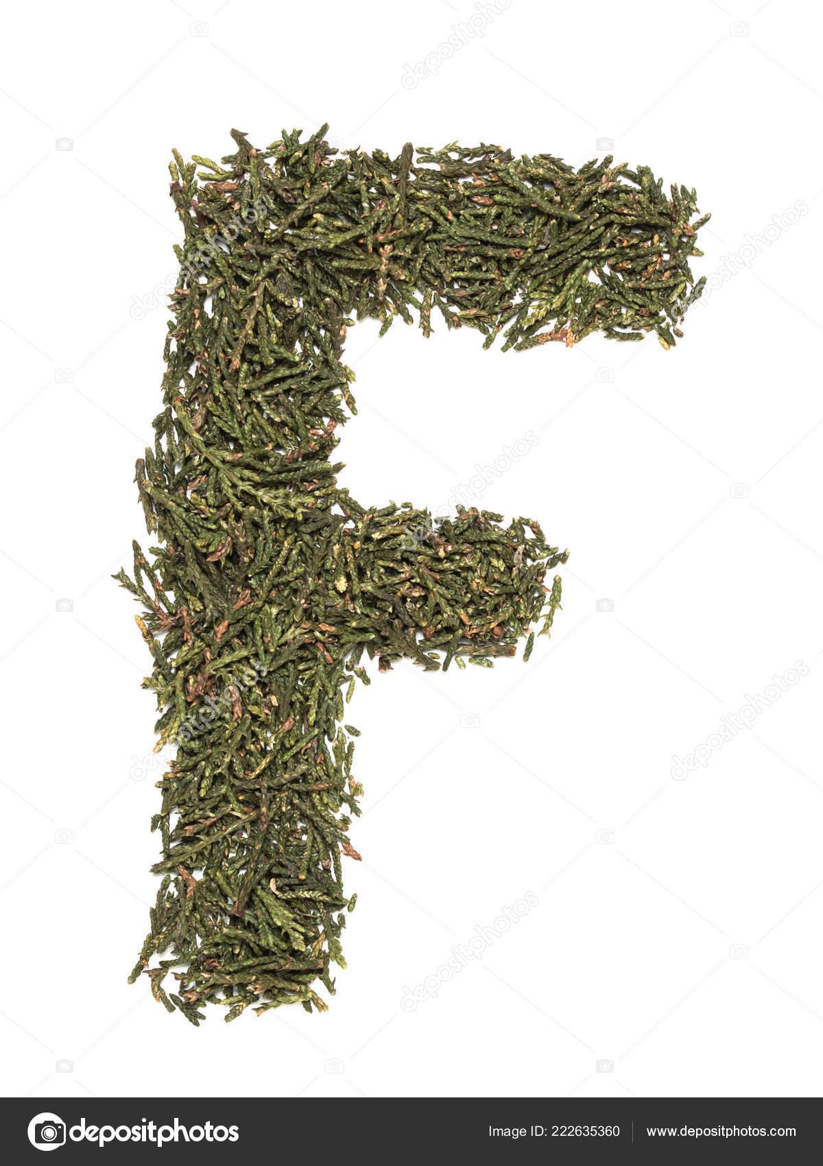 Grande Lettre Majuscule Anglais Que Faite Arbre Vert Sapin
