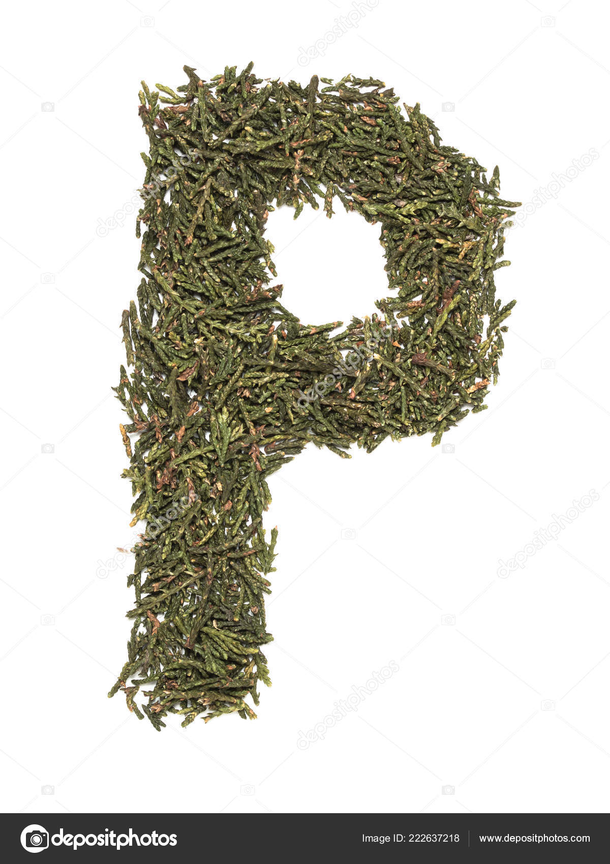 Grande Lettre Majuscule Anglais Faite Arbre Vert Sapin