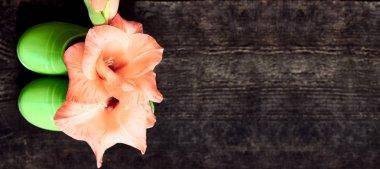 Pink gladiolus flower in green children boots on dark wooden background, top view, copy space