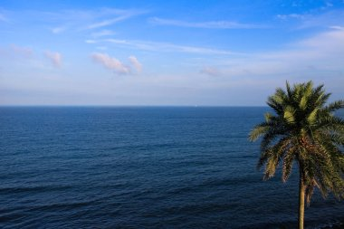 Under the clear sky, there is a quiet and endless deep blue ocean, and a vibrant palm tree.