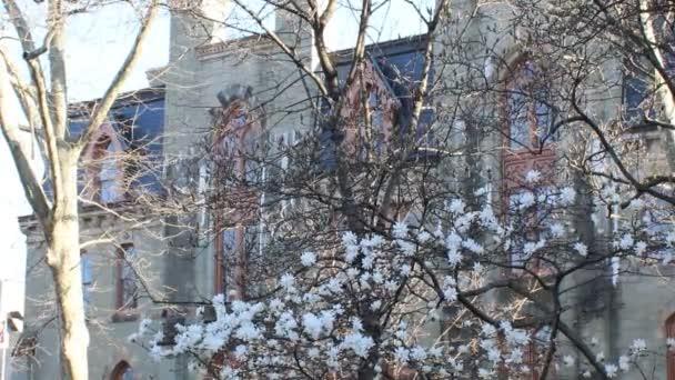 Videó a Cherry Blossom Tree