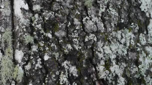 Detailní záběr z mechu a stromové kůry