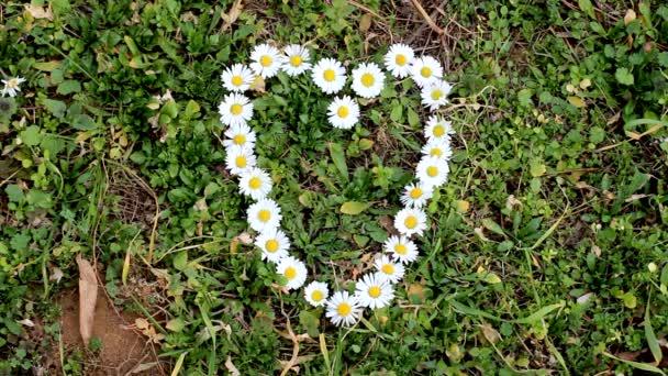 Květinové srdce s sedmikrásky na travnaté pozadí