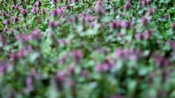 Video z kytice fialová
